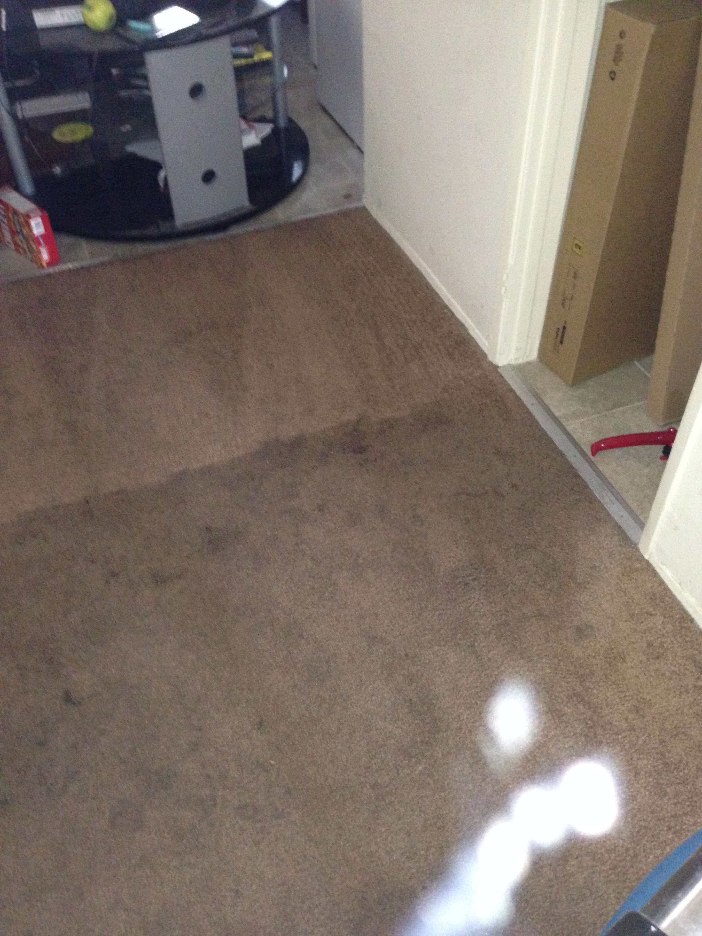 Carpet Cleaning Laguna Beach Services